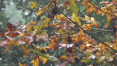 Oregon-Rain-On-Fall-Leaves-Pan-And-Zoom