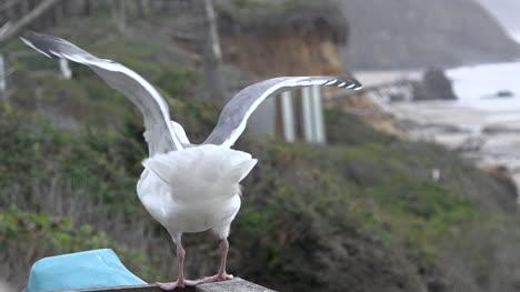 Oregon-Seagull-On-A-Railing-Above-The-Sea
