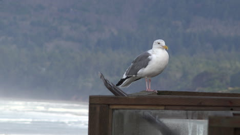 Oregon-Seagull-On-Rail