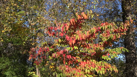 Oregon-Zooms-In-On-Red-Leaves-And-Balls