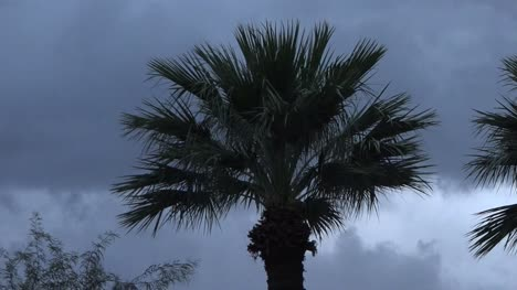 Palm-Trees-And-Clouds-Pan-And-Zoom-Out