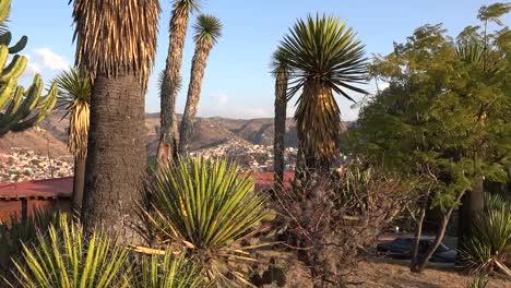 Mexico-Guanajuato-Suburb-Beyond-Yucca
