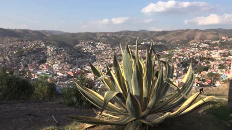 Mexico-Guanajuato-Yellow-And-Green-Maguey
