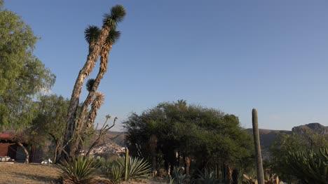 Mexico-Guanajuato-Yucca-Above-Suburb
