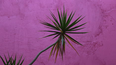 Mexico-Tlaquepaque-Plant-And-Hot-Pink