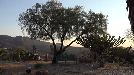 Mexico-Cactus-And-Tree-In-Late-Evening