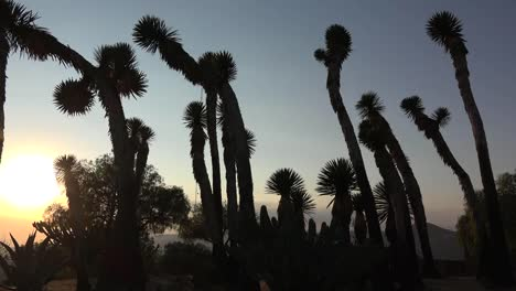 Mexico-Tree-Yucca-Against-Evening-Sky