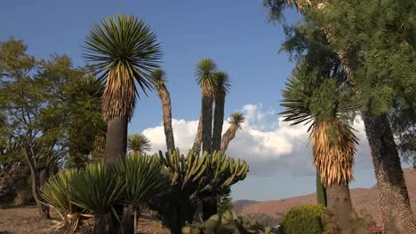 Mexico-Yucca-And-Cloud-In-Blue-Sky