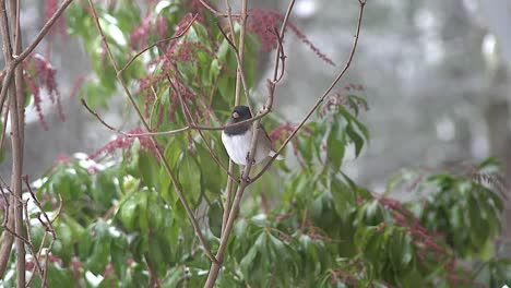 Oregon-Bird-In-Winter-Bush