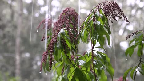 Rain-Pouring-On-Pink-Buds