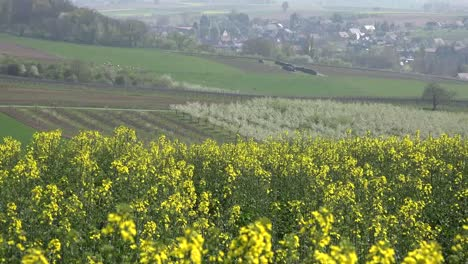 France-Alsace-Yellow-Crop-And-Orchard-View
