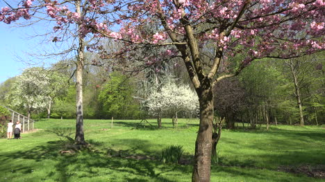 France-Lawn-With-Flowering-Trees