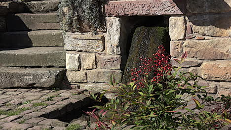 France-Red-Berries-And-Water-On-Stone