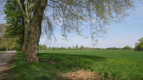 France-Spring-Tree-And-Rhine-Plain