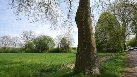 France-Tilts-Up-Large-Tree