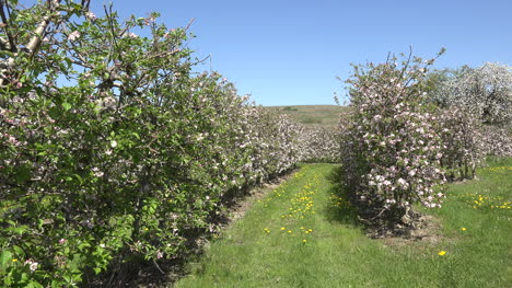 Germany-Curving-Row-In-Fruit-Orchard