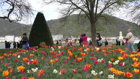 Germany-Looking-From-Tulips-To-Rhine