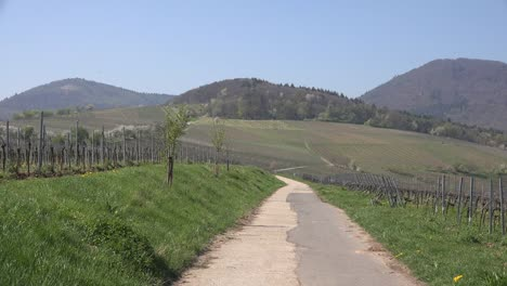 Germany-Wine-Route-Road-With-Vines-And-Hills