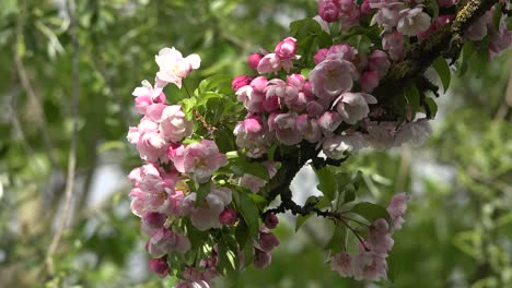 Green-Background-And-Pink-Flowers