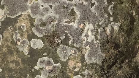 Nature-Lichens-On-Stone-Zoom-In
