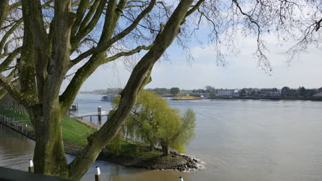 Netherlands-Plane-Trees-And-River-Lek