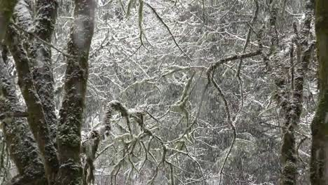 Snow-Falling-On-View-Between-Tree-Trunks-Zoom-In