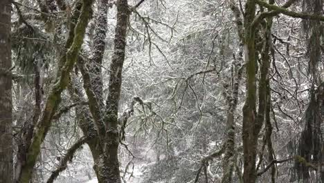 Snow-Falling-With-View-Between-Trees