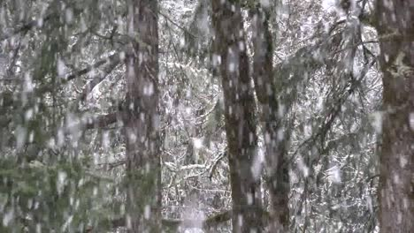 Snow-Falling-With-Zoom-On-Tree-Trunks