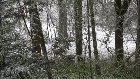 Snow-With-Deer-Hidden-In-Woods