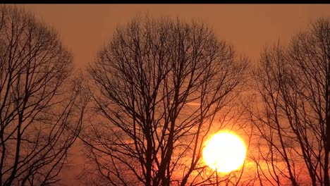 Sunset-Throught-Barren-Trees-Pan-Left