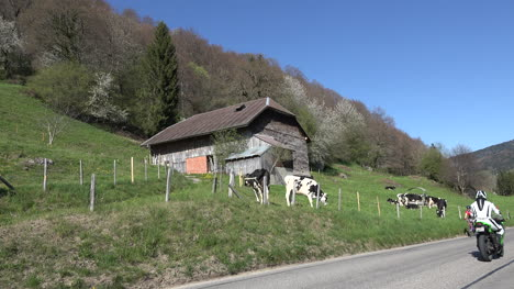 Switzerland-Bicycle-Cars-And-Cows