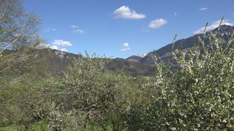 Switzerland-Hills-Above-Fruit-Trees