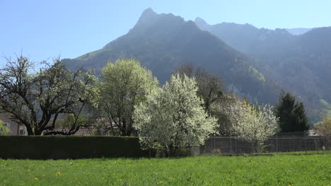 Switzerland-Mountains-And-Blooming-Fruit-Trees