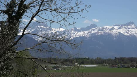 Switzerland-Spring-Tree-And-Mountain-View