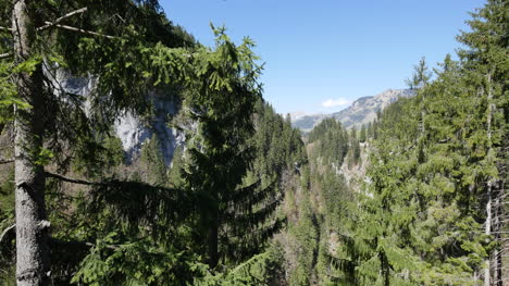 Switzerland-Trees-And-Mountains