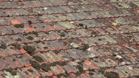 France-Moss-And-Lichens-On-Roof-Tiles