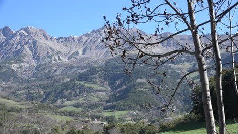 France-Spring-Tree-Branch-And-Alpine-View