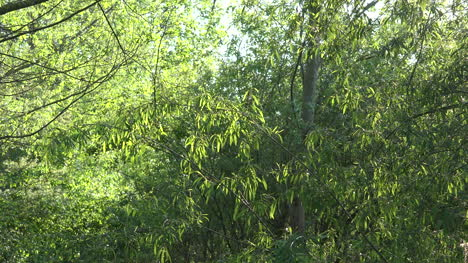 Green-Leaves-And-Flying-Insects-Zooms-In