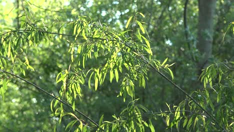 Green-Leaves-And-Flying-Insects