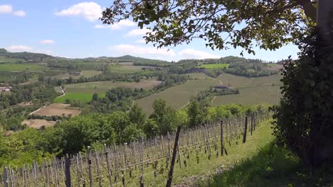 Italy-Langhe-Tree-Frames-Vineyards-On-Hills