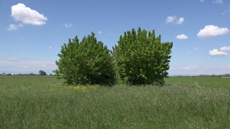 Italy-Veneto-Coastal-Plain-With-Row-Of-Trees