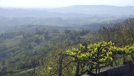 Italy-Grapevines-And-Misty-View
