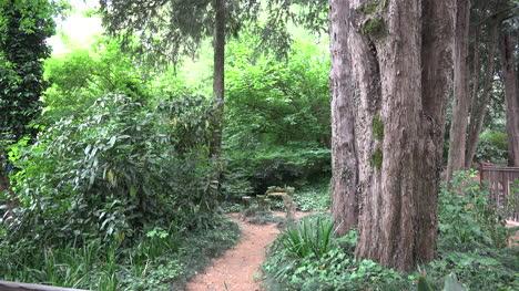 Italy-Trees-In-Po-Valley-Garden