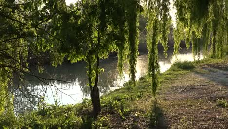 Italy-Sun-Shines-On-Willows-By-Stream-Pans-Left