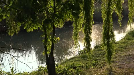 Italy-Sun-Shines-On-Willows-By-Stream-Zooms-In