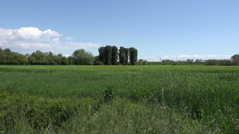 Italy-Young-Wheat-On-A-Coastal-Plain