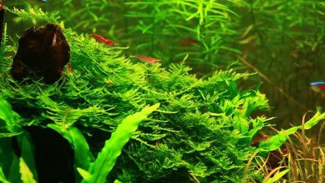 Aquarium-Design-Natural-Aquarium-Video-4