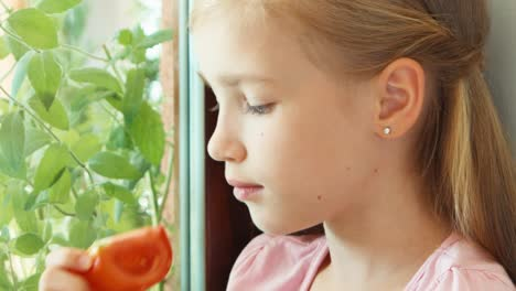 Closeup-Portrait-Girl-Sniffing-Tomato-Against-Window-And-Offers-At-Camera