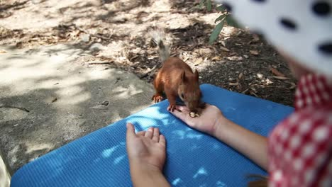 Happy-Girl-Feeding-A-Squirrel-Out-Of-Hand-Pet-Trusts-Human-Child