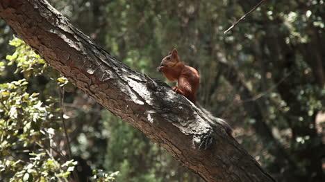 Ardilla-Comiendo-Nueces-Que-Le-Dieron-A-La-Niña-Sentada-En-El-árbol